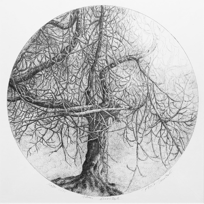 Alberi dimenticati, Fico, 2020 - 35x34 cm