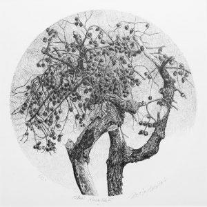 Alberi dimenticati, Pino, 2020 - 33x33 cm