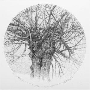 Alberi dimenticati, Tiglio, 2020 - 35x35 cm